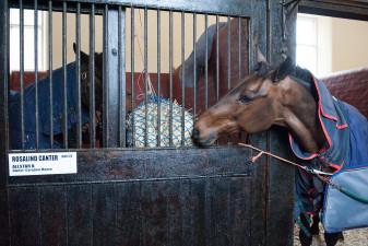 Social sharing! Portersize Just a Jif sharing Allstar B's hay