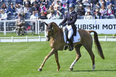 Euro Prince looking majestic in his test with Clare Abbott (IRL)