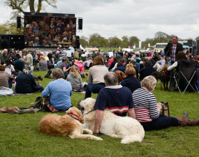 Four-legged friends and two take a breather to watch dressage on the big screen