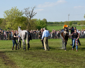 Perfect pair - Ballaghmor Class and Wii Limbo being cooled off after completing the final cross country rounds of the day
