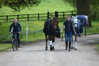 Jess Wilson doing a great job of multi-tasking, as she leads Mark Todds two mounts, Leonidas II and Kiltubrid Rhapsody