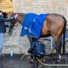 Waltham Fiddlers Find having his socks cleaned ahead of the final horse inspection
