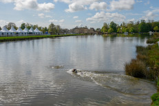 Top dog testing the water ahead of Saturday's cross country
