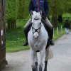 Harry Meade pilots Away Cruising back to the stables