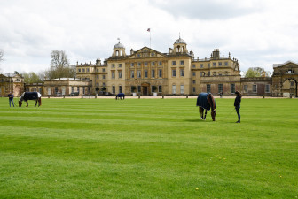 Happy horses in front of Badminton House