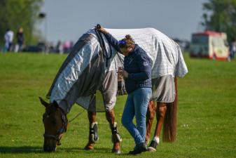 Qatar Du Puech Rouget enjoying a graze before cross country kicks off