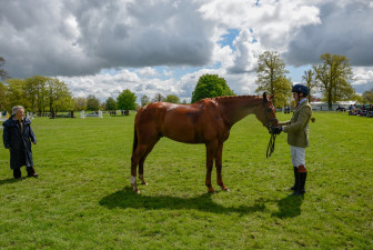 Ben Way presents MSH Bonanza in the Dubarry Young Event Horse five year old class