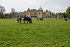Horses grabbing a bite to eat, before their dressage tests
