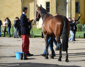 Super groom, Jackie Potts adding the finishing touches to Fernhill Pimms before he was presented