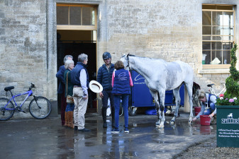 Collien P 2 getting plenty of cuddles from members of the Acorn Syndicate