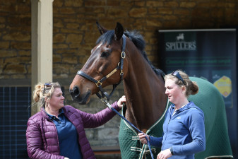 Fernhill Now Or Never looking majestic at the stables with Kate Honey