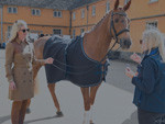 Horse Inspection 2018