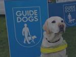 Dogs of Badminton